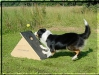 db_faithflyball13